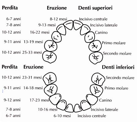 Dentiiii