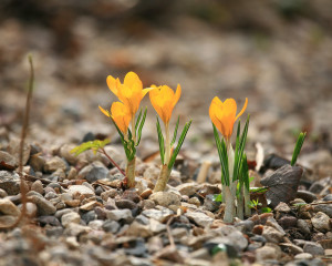 crochi_primavera