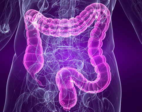 intestino-crasso